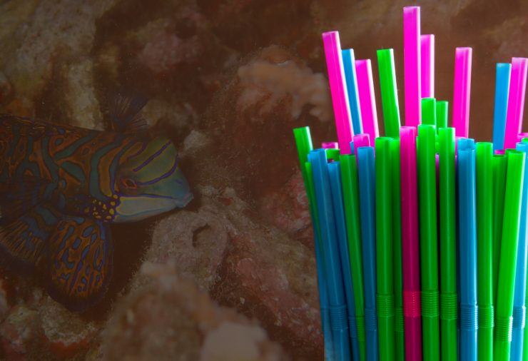 Plastic Straws and Sealife